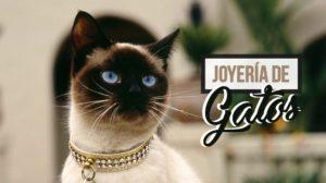 69.Joyería De Gatos Liberando A Nuestro Felino Interno 2