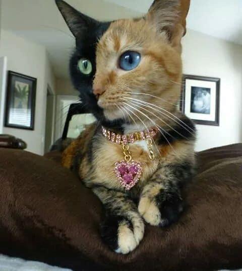 Joyería de Gatos