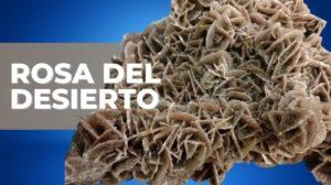 Rosa Del Desierto Mineral 2